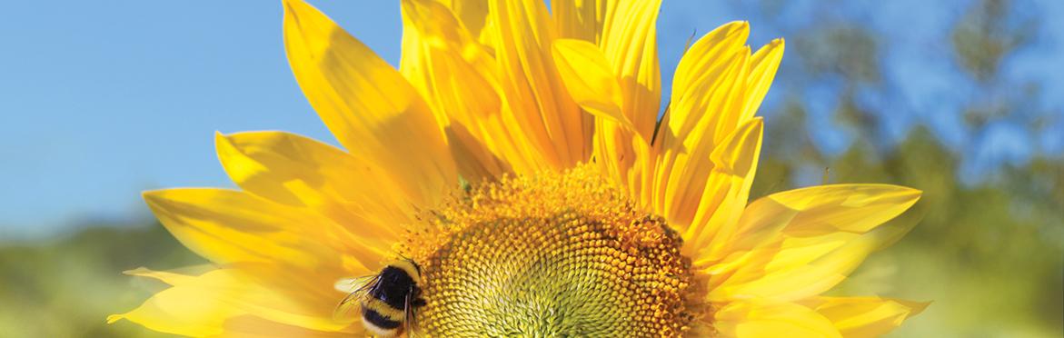 bee-fresh-flower-1a